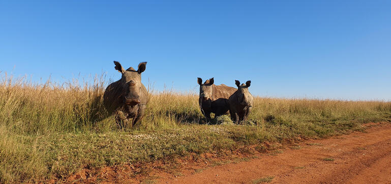 ERP Feeding Rhino Programme