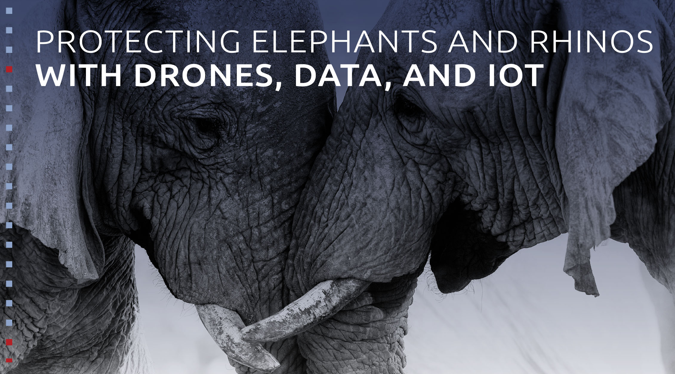 Protecting elephants and rhinos with drones, data, and IoT