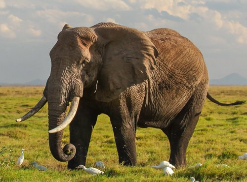 All about ERP: protecting Elephants and Rhinos